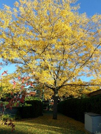 Manoir Saint-Sauveur : Arbre couleur automne a cote de la piscine de MSS
