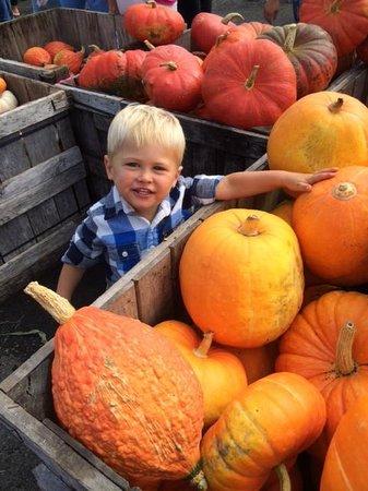 Applecrest Farm Orchards: pumpkins and gourds for sale