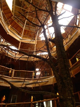 Nothofagus Hotel & Spa Huilo Huilo : ホテルの中心に木があり、その周りに螺旋状に部屋が連なる。