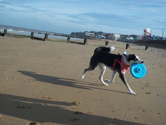 Manor Park Holiday Park - Park Resorts: Our clean, well behaved dog enjoying the beach (where they are allowed)