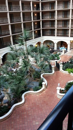 Sheraton Suites Tampa Airport Westshore : View from our room