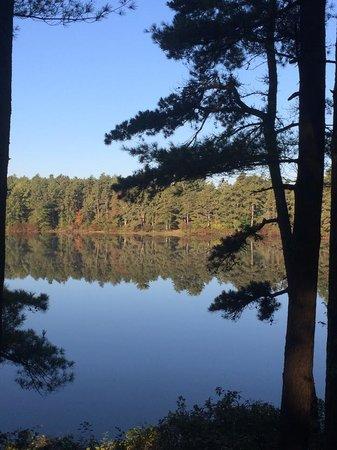 Myles Standish State Forest : Barrett's Pond