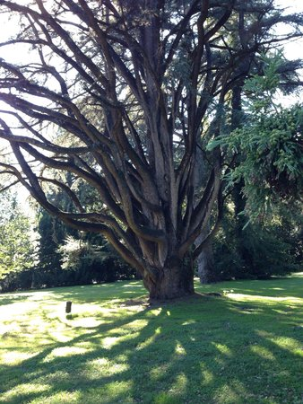 Giardino Inglese: La lunga storia di un albero
