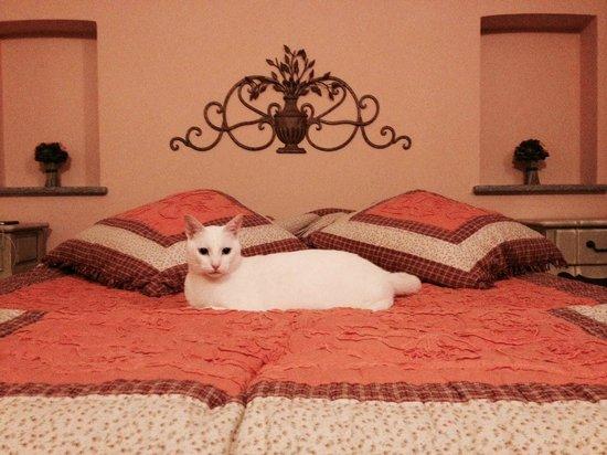Il Medolo di Pusterla : Il nostro gatto si è sentito proprio a suo agio