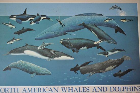 Moorea Dolphin Center : panneau d'info