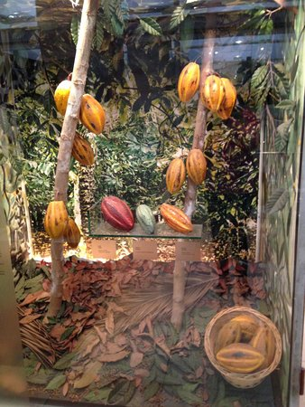 Museu de la Xocolata : Как растут какао-бобы