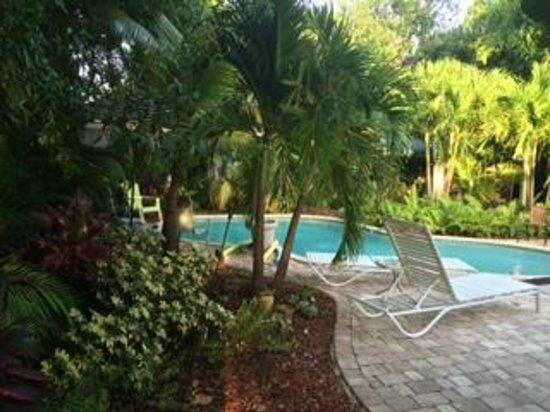 Calypso Inn: The pool