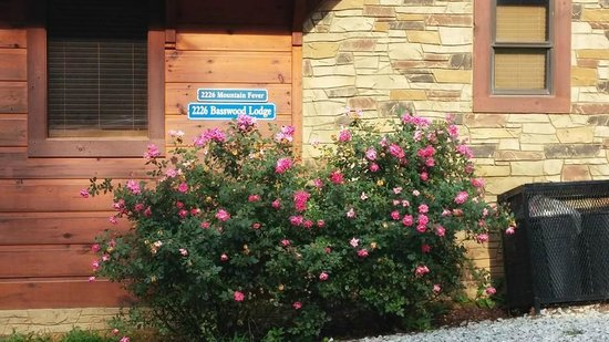 Elk Springs Resort : sign (previous cabin name sign still on cabin)