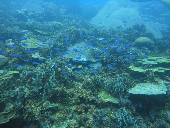 Muita vida marinha picture of diving planet cartagena for Dive planet