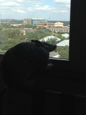Drury Plaza Hotel San Antonio North Stone Oak : Armie enjoying the view