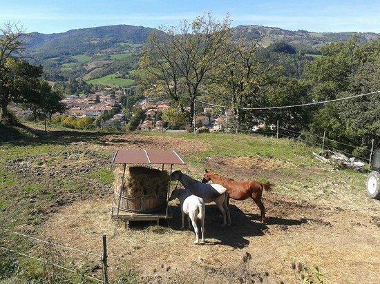 agriturismo bb casenuove cavalli