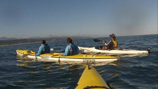 Dolphin Adventures: see kayak