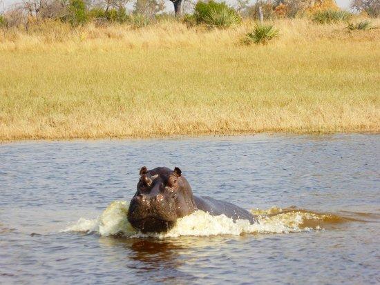 Macatoo Horseback Safari Camp   UPDATED 2017 Prices   Lodge Reviews   Botswana Okavango Delta    TripAdvisor. Macatoo Horseback Safari Camp   UPDATED 2017 Prices   Lodge