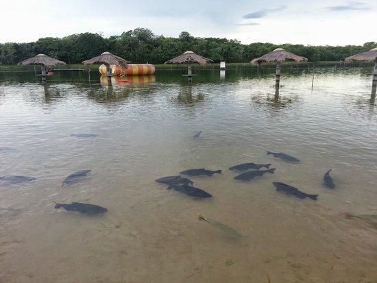 Figueira Beach: Peixes