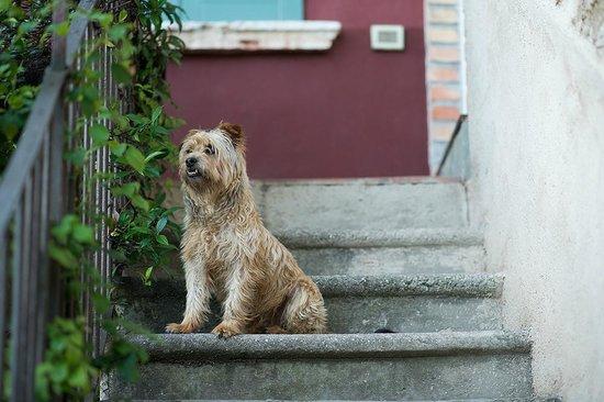 Casa del Tempo Ritrovato : Haushund