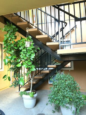 Americas Best Value Inn & Suites - San Francisco Airport : all the plants around the courtyard add a nice touch