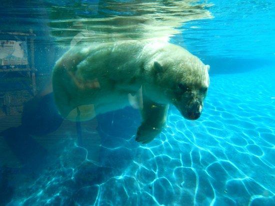 La Fleche, Франция: ours blanc