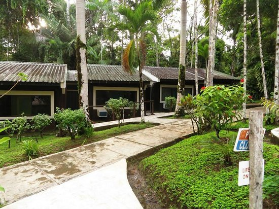 Ceiba Tops Lodge by Explorama: Rooms by the pool