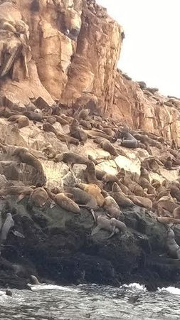 Islas Palomino: Smelling and roaring sea lions