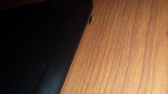 Ramada West Memphis: roaches
