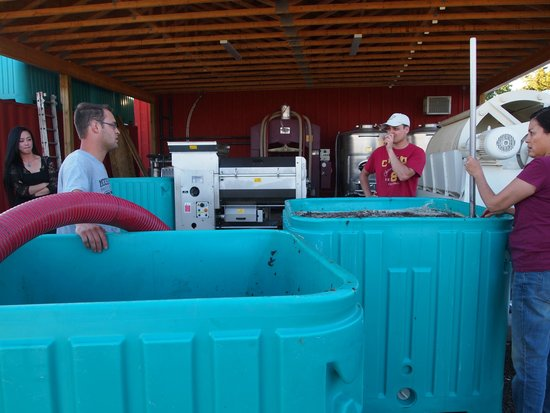 Between the Lines Winery: Crushing the Grapes