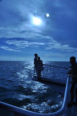 Glass Bottom Boat Discovery Tour: Honeymoon memories
