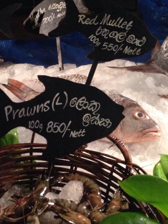 Seafood Cove : Fresh fish display