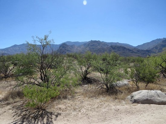 Catalina State Park : View From Nature Trail