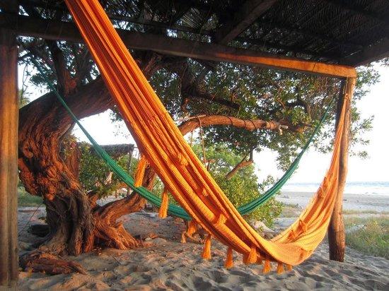 Casa Delfin Sonriente : hammock