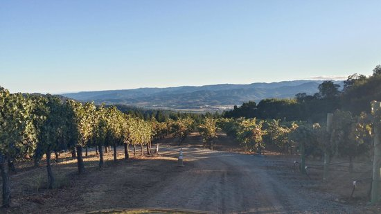 BobDog Winery: BobDog views