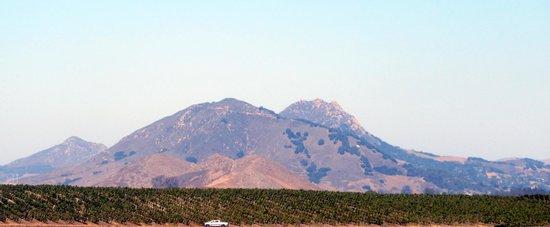 Vineyard and Volcanic View, Edna Valley Vineyard, San Luis Obispo, Ca