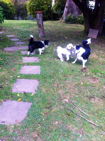 Pub Hill Farm: My dog playing with two of Micki & Ian's border collies