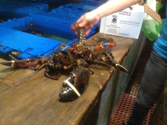 Beach Plum Lobster Farm: 3 1/2 lbs live