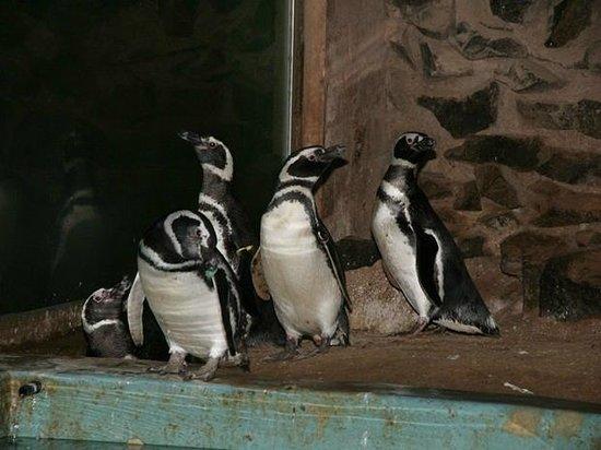 Bauru, SP: pinguinário