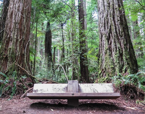 Redwoods, Whakarewarewa Forest: No better place for a chat and some coffee
