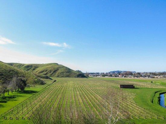 Vast vineyard views from Mission Estate Winery garden