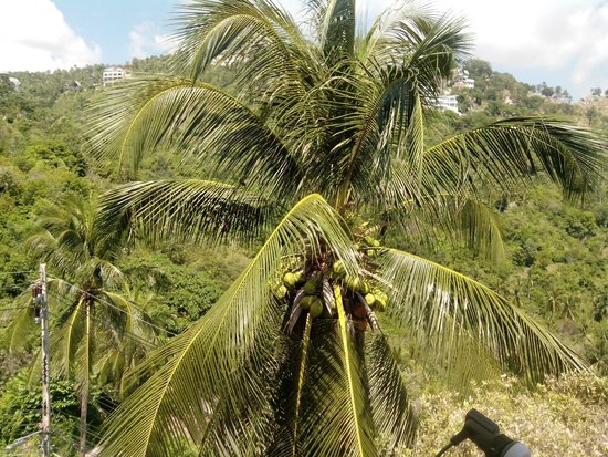 Ban Sua Samui: View