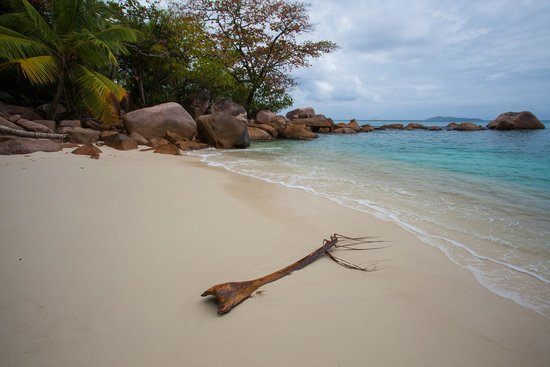 Isla Praslin, Seychelles: This is the most beautiful beach I have ever visited - tunliweb.no