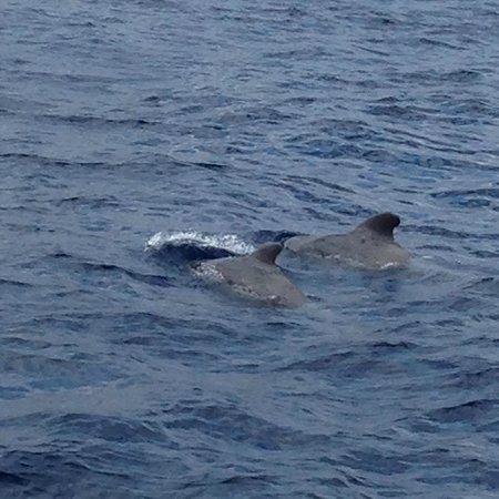 Excusión de avistamiento de ballenas y delfines FreeBirdOne: Дельфины