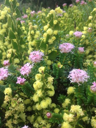 Margaret River Discovery Co. Tours: Wildflowers on the cliffs