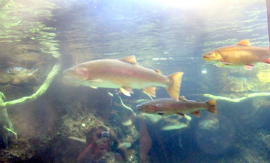 Turtle Bay Exploration Park: Fish Area - Turtle Bay Museum, Redding, CA