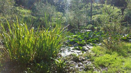 Naturhotel Steinschalerhof : Biotop im Garten