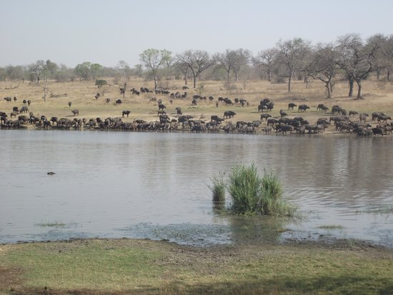 Chitwa Chitwa Private Game Reserve : Room with a view!