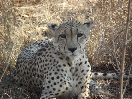 Chitwa Chitwa Private Game Reserve : Amazing encounters