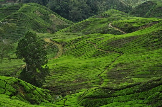 Cameron Highlands Jungle Trail No. 1: Trail Nr. 1 - way down