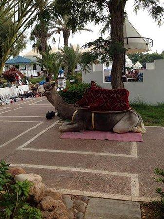 Caribbean Village Agador: Chocolate !!!!