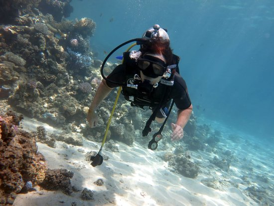 Coral Diving Club : diving with coral  ras mohamed