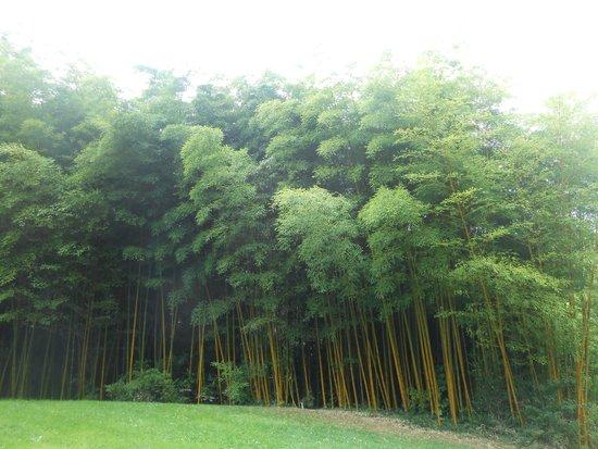 Bambous du conservatoire botanique national de brest for Boulevard du jardin botanique 20