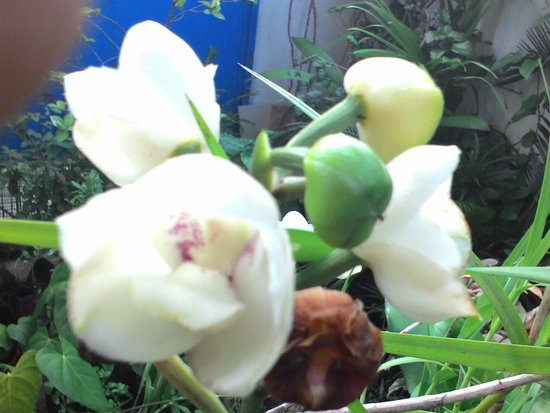 Dream Catcher Homestay : orchids