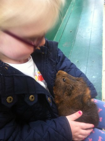 Willows Activity Farm: Holding the Guinea Pigs